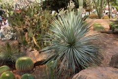 Zielony kaktus Zdjęcia Royalty Free
