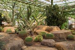Zielony kaktus Obraz Royalty Free