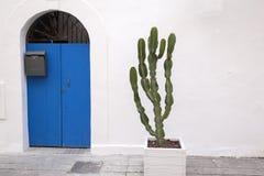 Zielony kaktus Obrazy Royalty Free