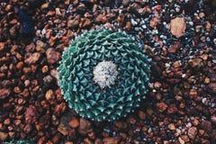 Zielony kaktus na żwirze obrazy royalty free