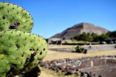 Zielony kaktus przed ostrosłupem zdjęcia stock