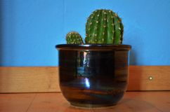 Zielony kaktus w flowerpot w domu fotografia royalty free