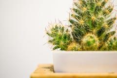 Zielony kaktus w garnkach na białym tle zdjęcie stock
