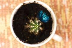 Zielony kaktus z błękitnym kwiatem w kubku zdjęcia royalty free