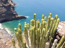 Zielony kaktus z zamazanym oceanem w tle Obrazy Stock