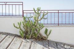 Zielony kaktusowy dorośnięcie na drodze przemian Fotografia Stock