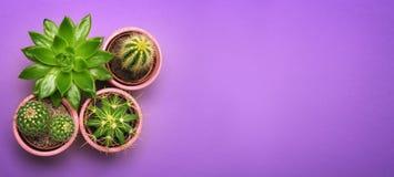 Zielony kaktusowy sukulent w ceramicznego garnka odgórnym widoku z kopii przestrzenią na pastelowego koloru pomarańcze tle Minima obraz stock