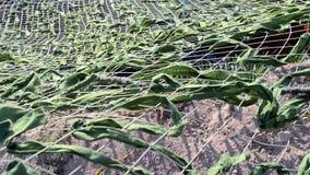 Zielony kamuflaż maskuje siatkę, poufny dana, zbiory