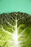 zielony kapusta liść Fotografia Stock