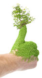 zielony kciuk Zdjęcie Royalty Free