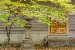 Zielony klonowy drzewo i liście obrazy stock
