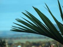 Zielony kokosowy liść skupiający się zdjęcia stock