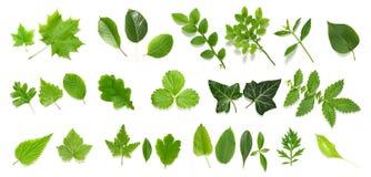 zielony kolekcja liść Zdjęcia Royalty Free