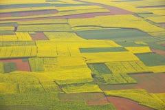 zielony kolor żółty Fotografia Stock