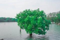 Zielony kolor drzewo fotografia stock