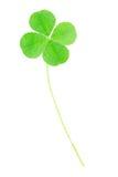 zielony koniczyna liść cztery Zdjęcia Royalty Free