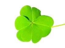 Zielony koniczynowy liść odizolowywający Zdjęcie Stock