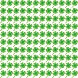 Zielony koniczynowy liścia wzór Zdjęcie Royalty Free
