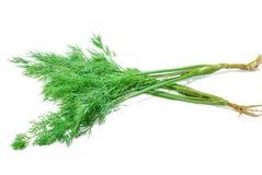 Zielony koper odizolowywający na bielu obraz royalty free