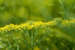 zielony koperu kolor żółty Obraz Royalty Free