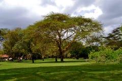 zielony krajobraz Zdjęcie Stock