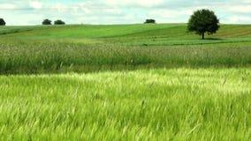 zielony krajobraz zbiory