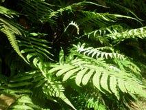 zielony krajobraz trawy Zdjęcie Royalty Free