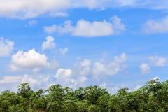 Zielony krajobraz z silnymi coluds Zdjęcia Stock