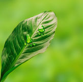 Zielony krok Zdjęcie Stock