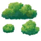 Zielony krzak Obrazy Stock