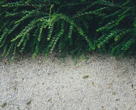 Zielony krzak Zdjęcie Stock