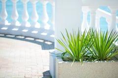 Zielony krzak outdoors na słonecznym dniu fotografia royalty free