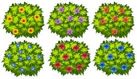 Zielony krzak z kolorowymi kwiatami ilustracji