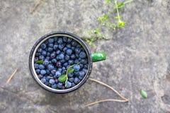 Zielony kubek z czarnymi jagodami Zdjęcia Stock
