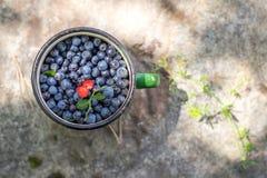 Zielony kubek z czarnymi jagodami i truskawkami Zdjęcie Stock