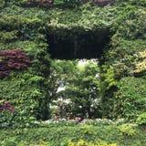 zielony kwadrat obraz royalty free