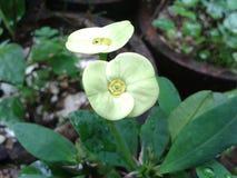 Zielony kwiat Obrazy Stock