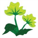 Zielony kwiat Fotografia Royalty Free
