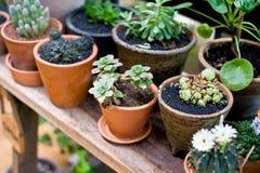 Zielony kwiat na wazowym garnku w ogródzie robi odczuciu świeży i relaksuje Obrazy Stock