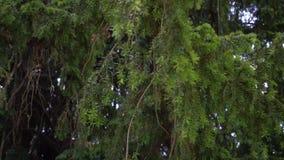 Zielony kwiat z wielkimi liśćmi zdjęcie wideo
