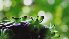 Zielony kwiat z zielenią bg zdjęcie wideo