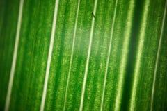 Zielony kwiatu ulistnienie, makro- photoghaphy Zdjęcie Royalty Free