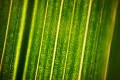 Zielony kwiatu ulistnienie, makro- photoghaphy Obraz Royalty Free