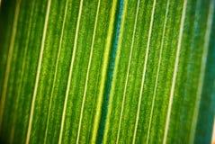 Zielony kwiatu ulistnienie, makro- photoghaphy Zdjęcie Stock