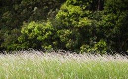 Zielony kwiecenie chył od wiatru Zdjęcia Stock