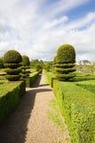 zielony labirynt Fotografia Royalty Free