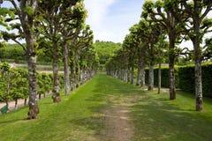 zielony labirynt Obraz Stock