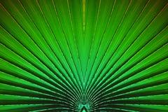 Zielony lampasa plama liść dla abstrakcjonistycznego tła Fotografia Stock