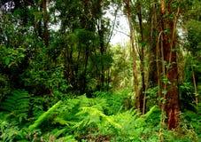 zielony lasów deszczowych zdjęcie royalty free