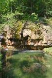 Zielony las Zdjęcie Royalty Free